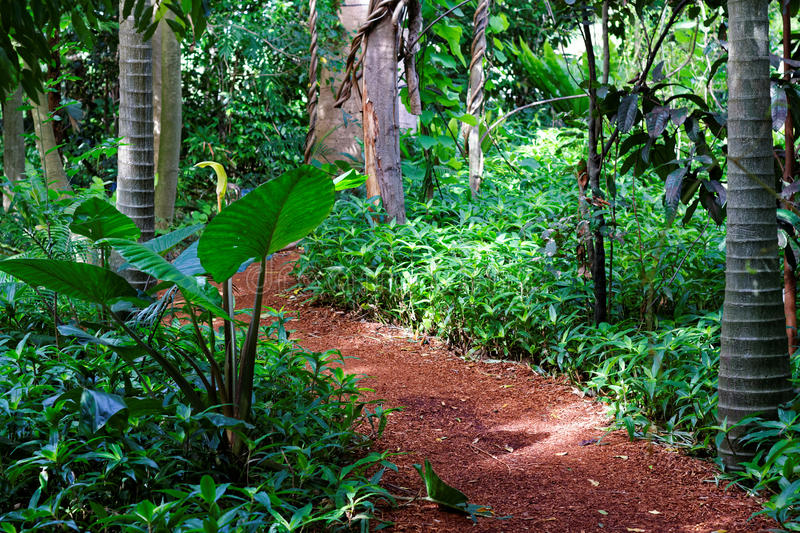 Wood-chipped path through tropical rain forest royalty free stock photos