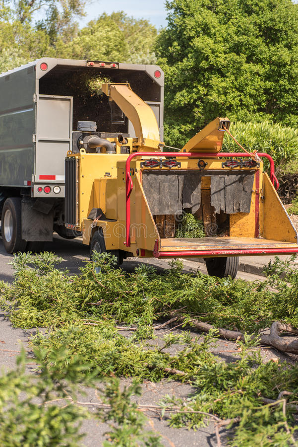 Wood chipper machine works on Redwood branches. Large branches from a Redwood tree are fed into a wood chipping machine royalty free stock photo