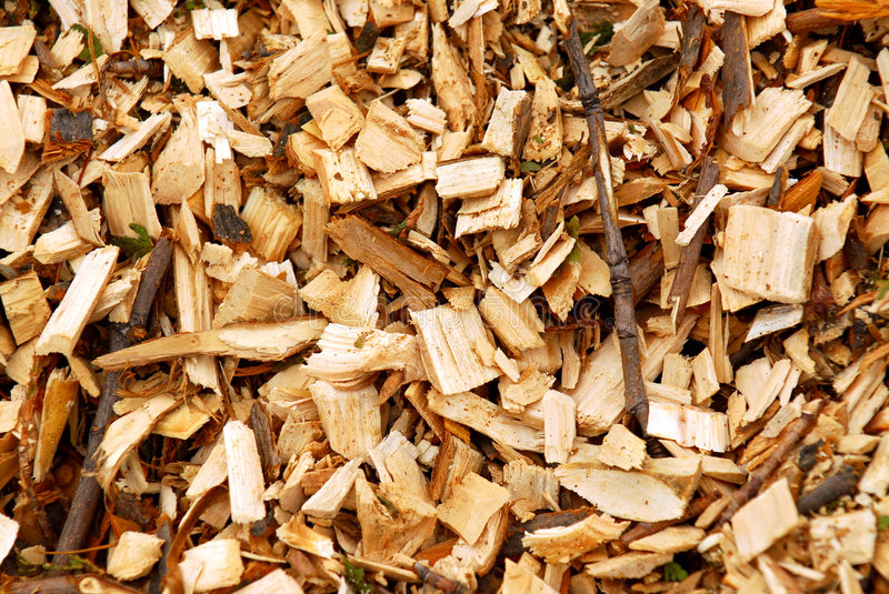 Wood chips. Background of freshly made yellow wood chips royalty free stock images