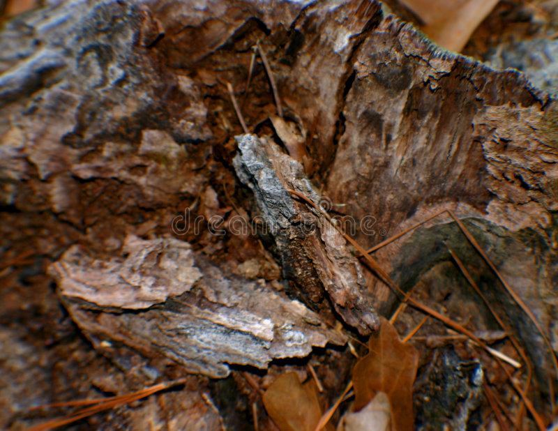 Download Wood Chips Stock Image - Image: 56511