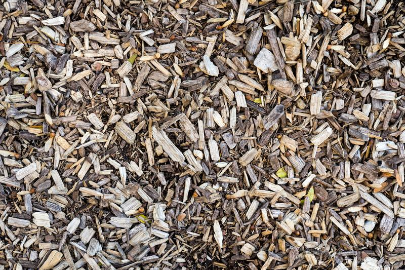 Wood chips background. Closeup brown wood chips texture and background royalty free stock photo