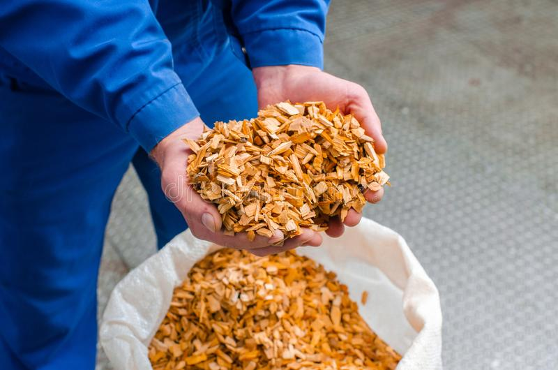 Wood chips. The line for the production of smoked delicacies. In. Dustrial manufacture of sausage products. Smokehouse of meat products stock photo