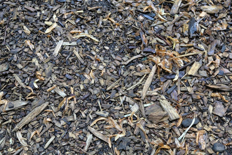 Wood chips for paths. Chips made of precious wood for construction and landscape design stock photography