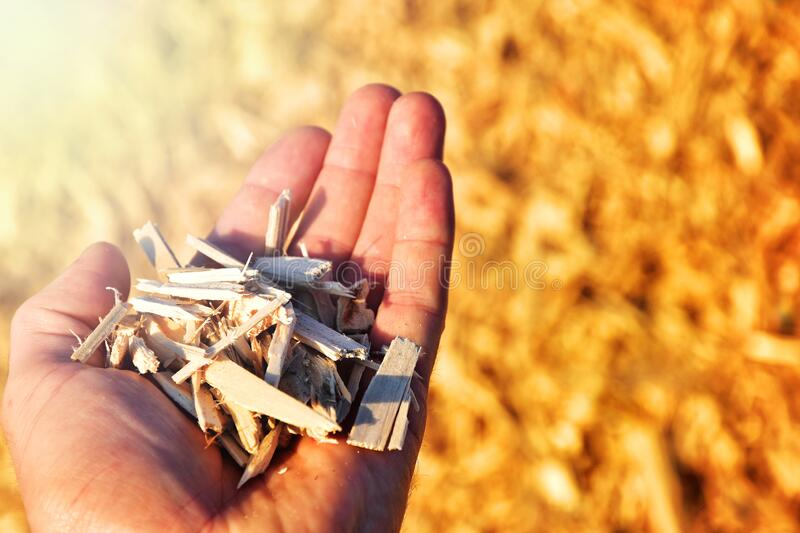 Wood chips renewable power royalty free stock photo