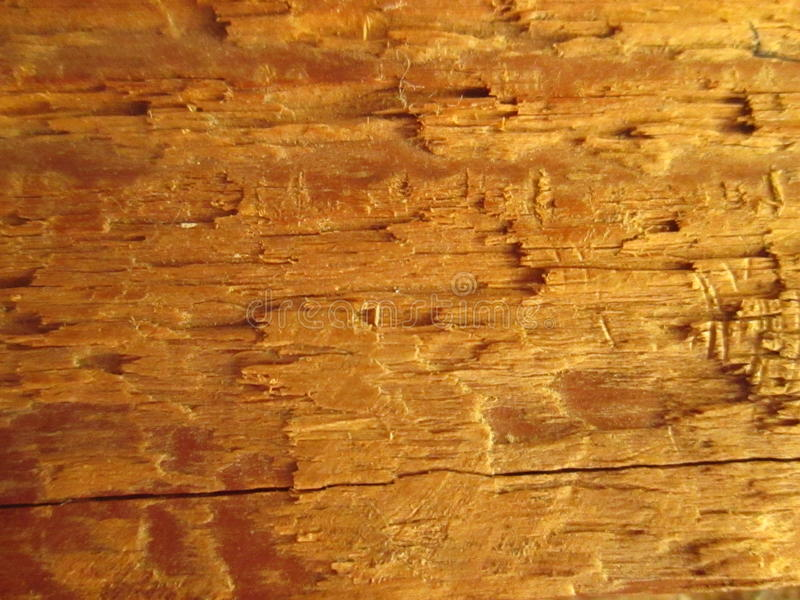 Wood. royalty free stock image