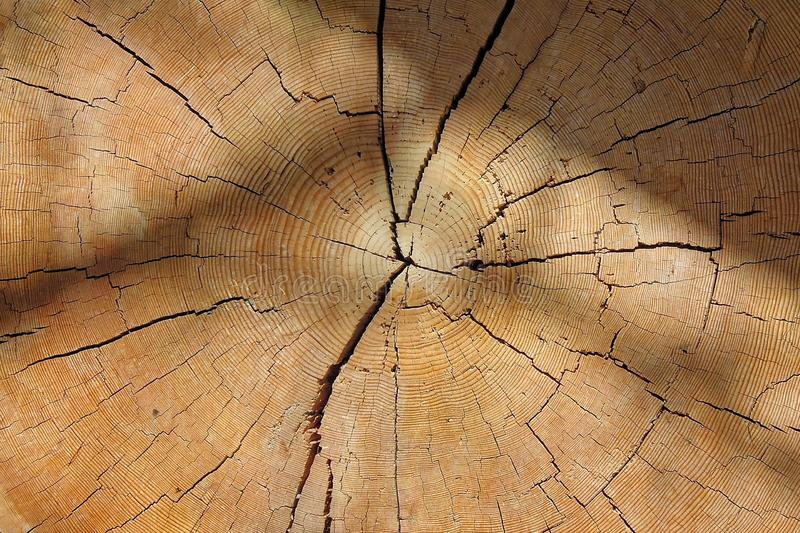 Wood, Close Up, Texture, Tree royalty free stock photos