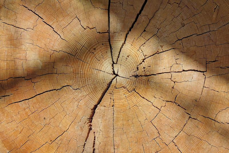 Wood, Close Up, Texture, Tree stock photo
