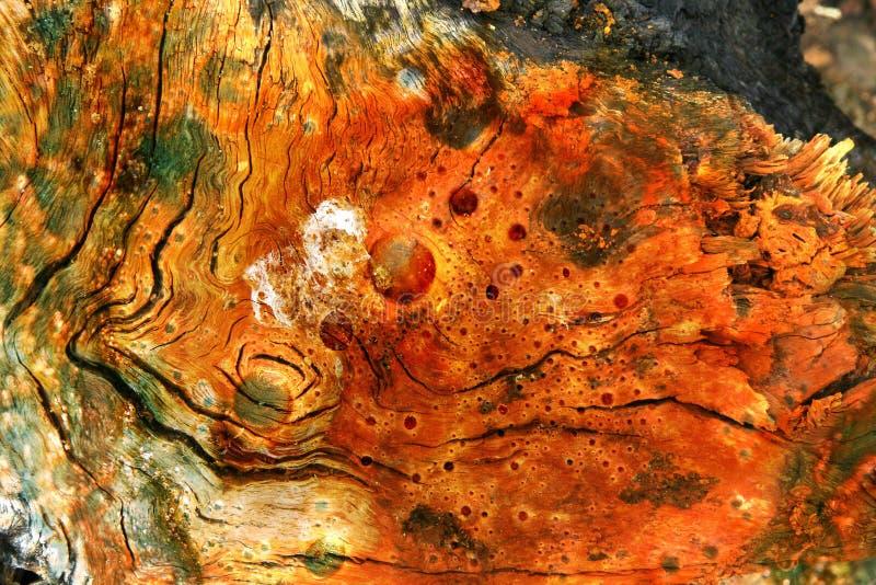 Wood Composition Free Public Domain Cc0 Image