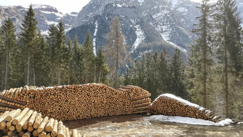 Wood cut from the forest and stacked. Wood cut forest stacked stackofwood stock images