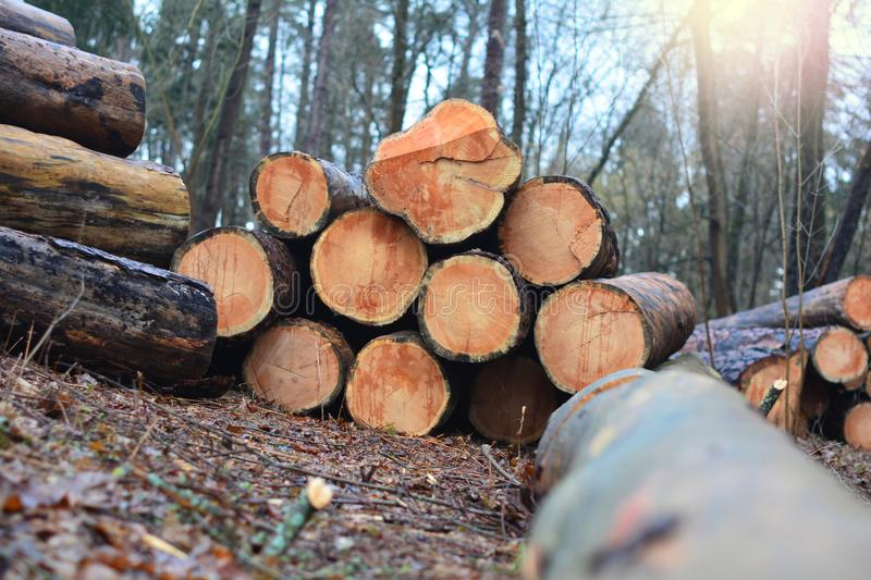 Wood cut logs in a row. Forest clearance royalty free stock image