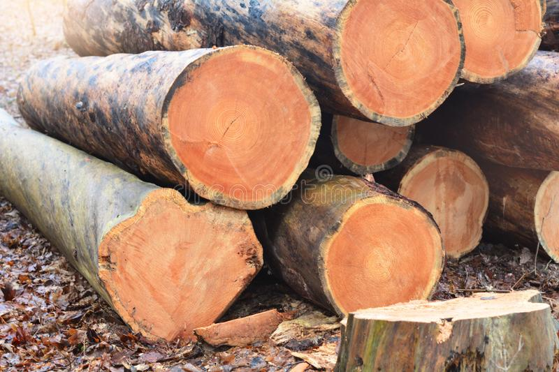 Wood cut logs in a row. Forest clearance stock photo