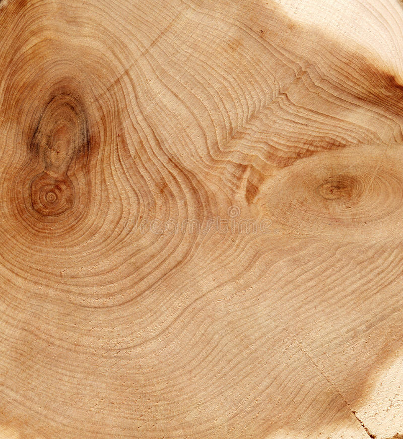 Wood cut texture stock image
