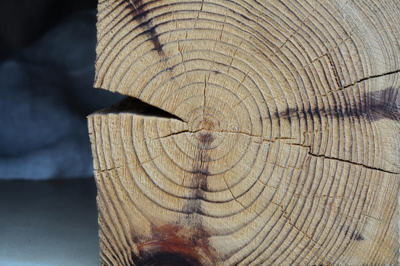 Wood cut texture royalty free stock photography