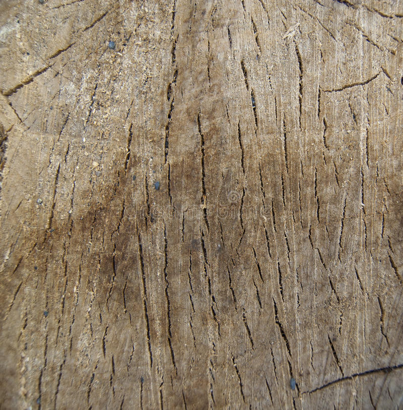 Wood cut to create. royalty free stock photography