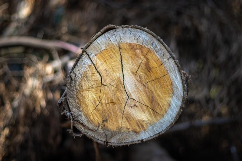 Wood Cutting pattern. Wood art done by nature due to long exposure in different weather stock image