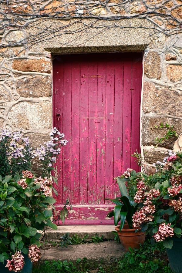 Wood dörr för ljus rosa färgmålarfärg på gammalt stenhus arkivbilder