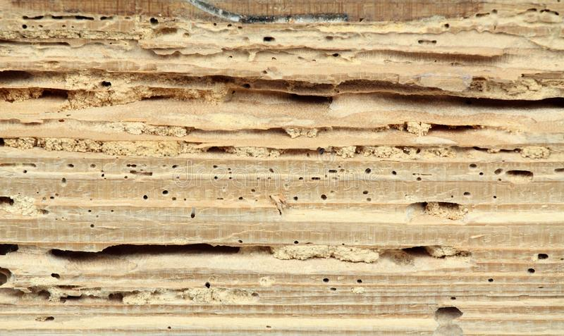 Wood damaged by woodworm royalty free stock photos