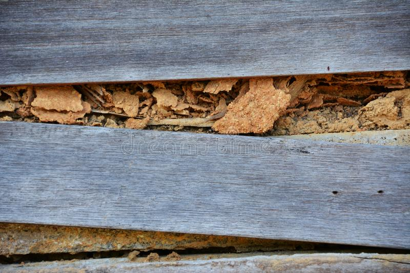 Wood decay with wood termites. Old wooden panels used to create the walls of the house and being eaten by termites stock photo