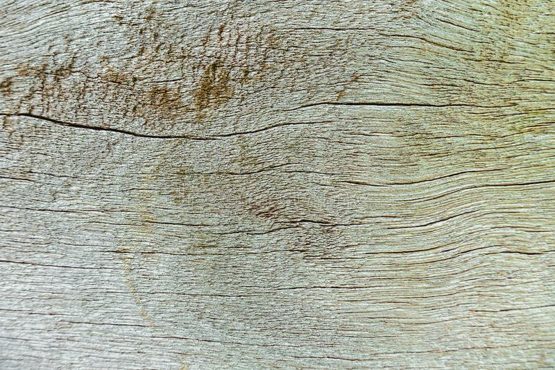Wood decay with wood termites,Old grunge dark textured wooden background. Wood decay with wood termites,Old grunge dark textured wooden background,The surface royalty free stock photo