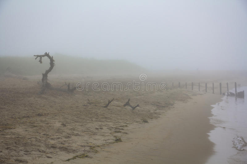 Wood dragon on the beach - stock photo stock images