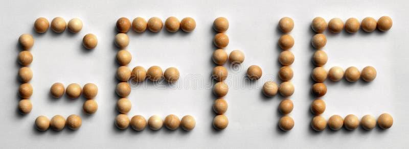 Wood ` för gen för ` för halsordkonst, arkivfoton