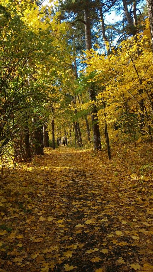 Wood. Fall stock photos