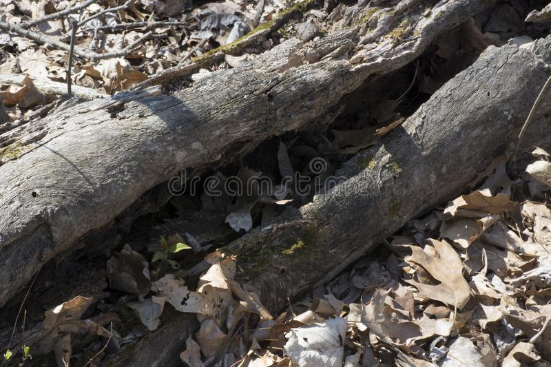 Decaying wood detail royalty free stock photography