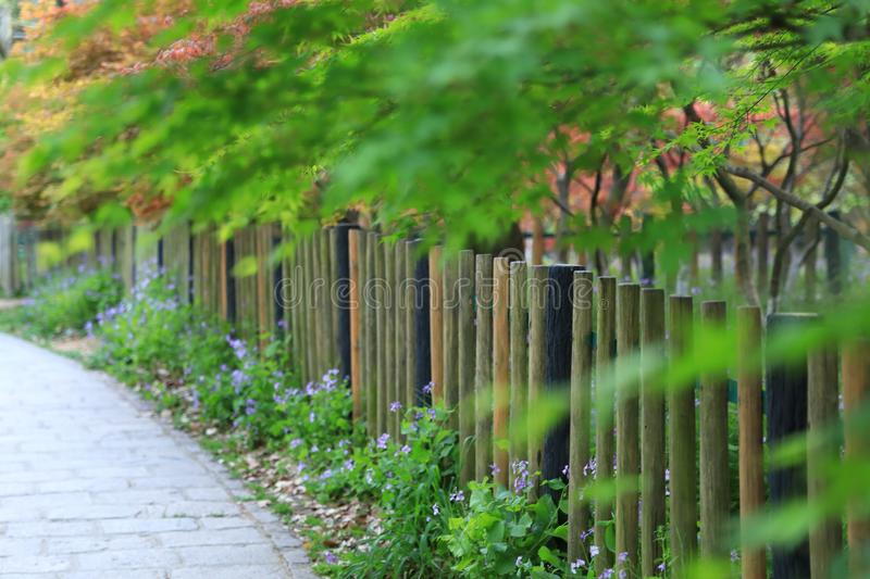 Fence in the spring Fall royalty free stock image
