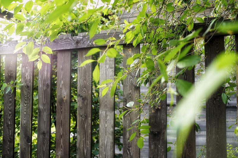 Wood fence sunlight green leaves village. Wood fence sunlight green leaves tree branch nature backgrounds textured summer village royalty free stock photography