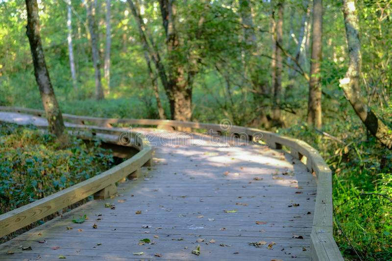 Wood Trail Curving Around Bend royalty free stock photo
