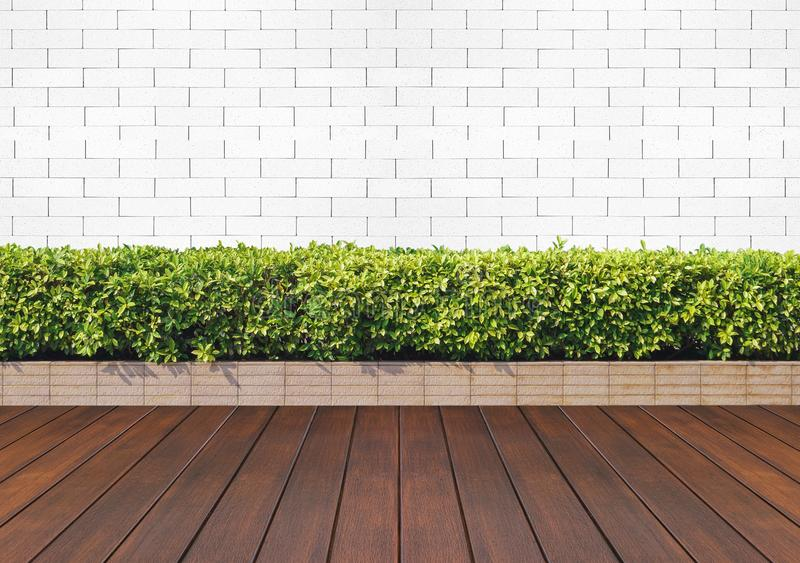 wood floor with plant and white brick wall stock photos