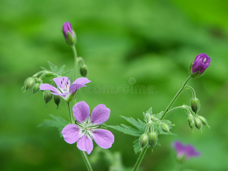 Wood flower royalty free stock photography