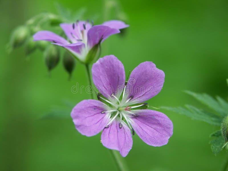 Wood flower stock image