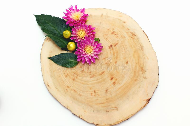 Wood and flowers dahlias. top view creative layout. Flat lay royalty free stock photography