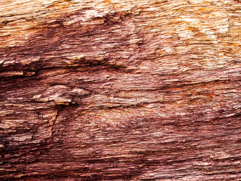The wood fossil of a large tree in complete condition. Texture of wood fossil of a large tree in complete condition stock photo