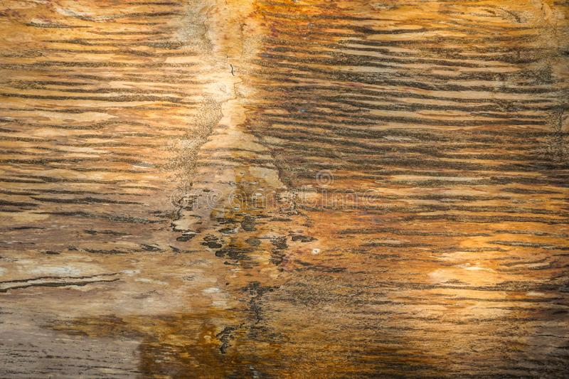 Wood fossils texture with shiny and marble textures with brown color and crack around - photo. Indonesia stock photography