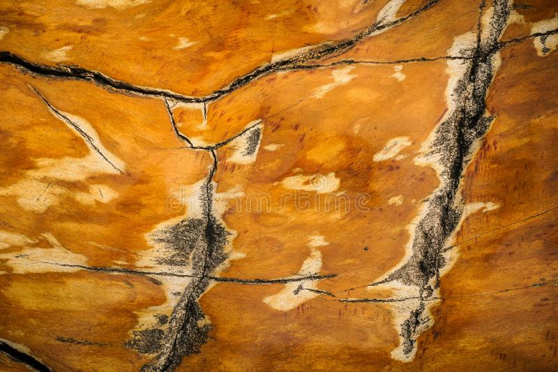 Wood fossils texture with shiny and marble textures with brown color and crack around - photo. Indonesia royalty free stock images