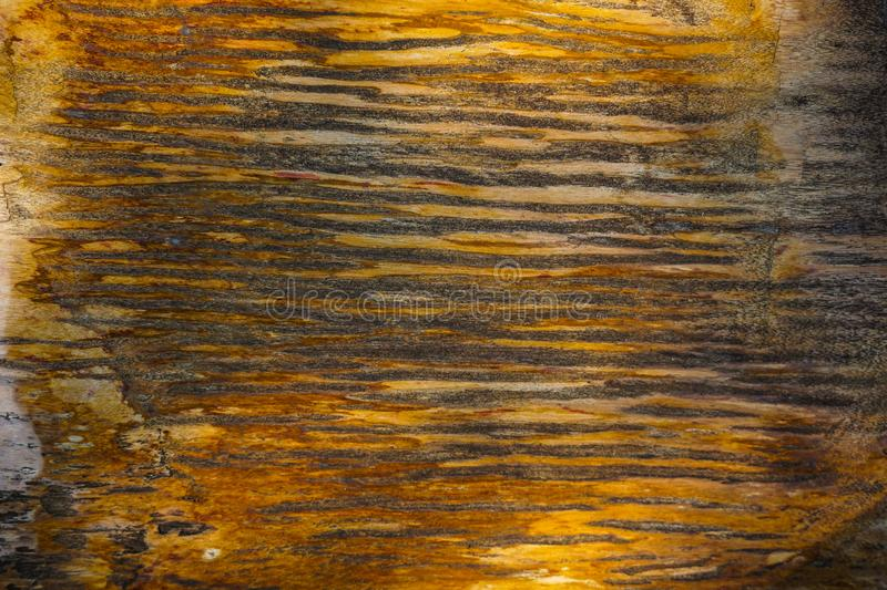 Wood fossils texture with shiny and marble textures with brown color and crack around - photo. Indonesia stock images