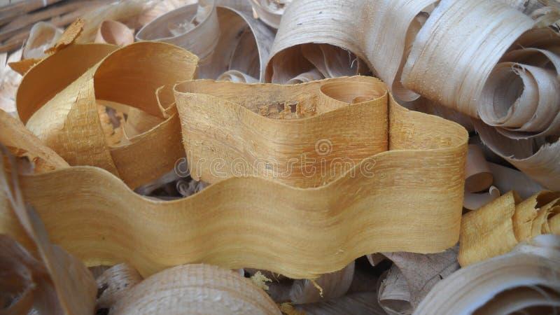 Wood gåva av naturen royaltyfria foton