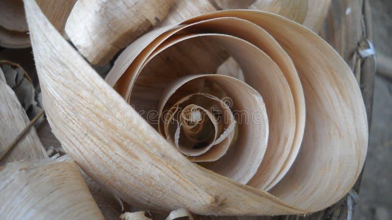 Wood gåva av naturen fotografering för bildbyråer