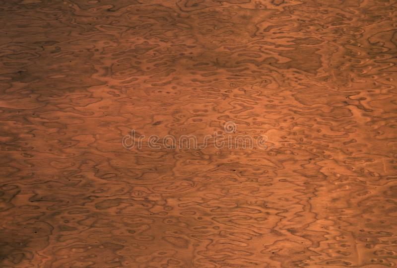 Wood grain background. decorative veneer. walnut root. royalty free stock photo