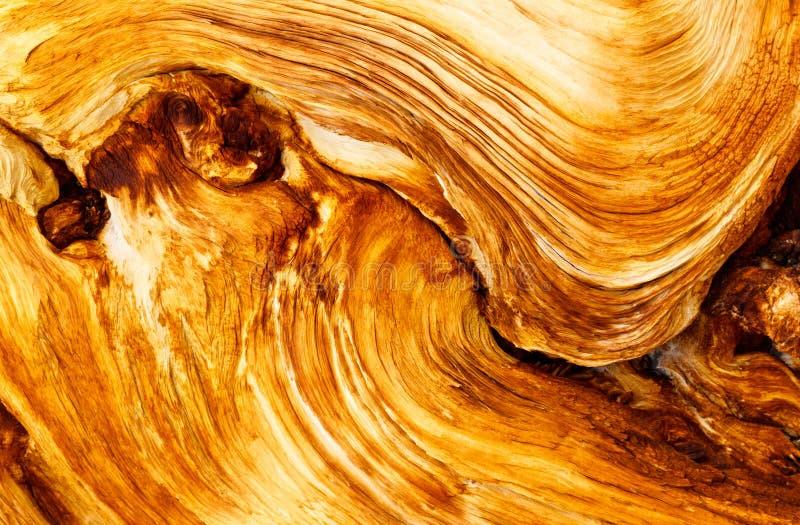 Wood Grain of Dead Pine Tree stock photos