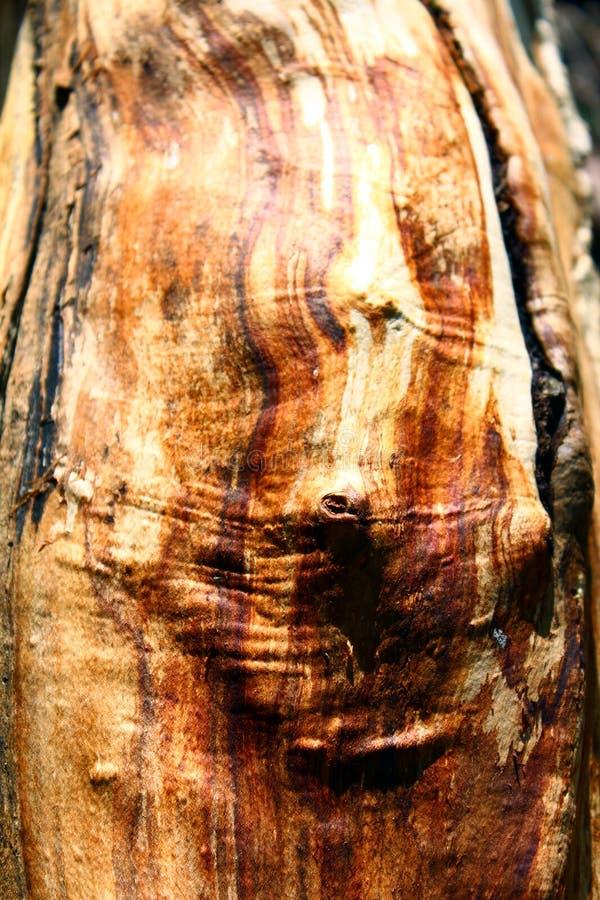 Download Wood Grain stock image. Image of wood, naturally, brown - 90908163