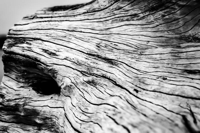 Wood grain royalty free stock image