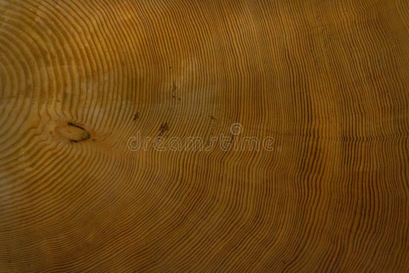 Wood grain rings of Cut Tree Trunk royalty free stock images