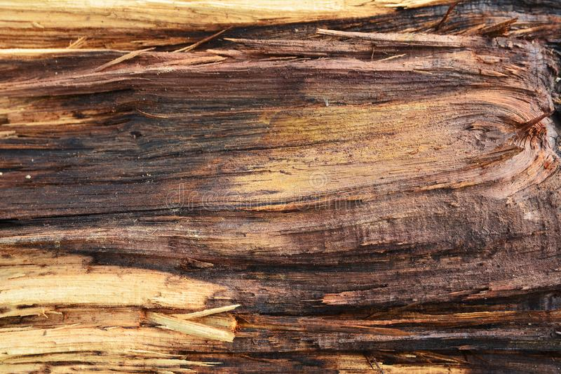 Wood grain surface royalty free stock image
