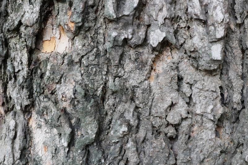 Wood grain texture, trees, images for the background  Copy space  Selectable focus royalty free stock photo