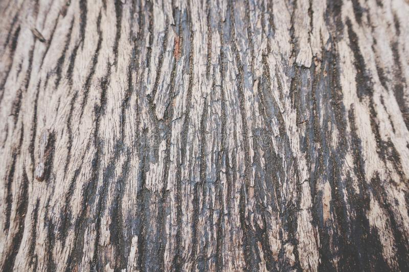 Wood grain texture, trees, images for the background  Copy space  Selectable focus stock images