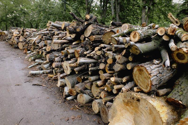 Wood hög Klipp trädbakgrund Högen av loggar arkivfoto