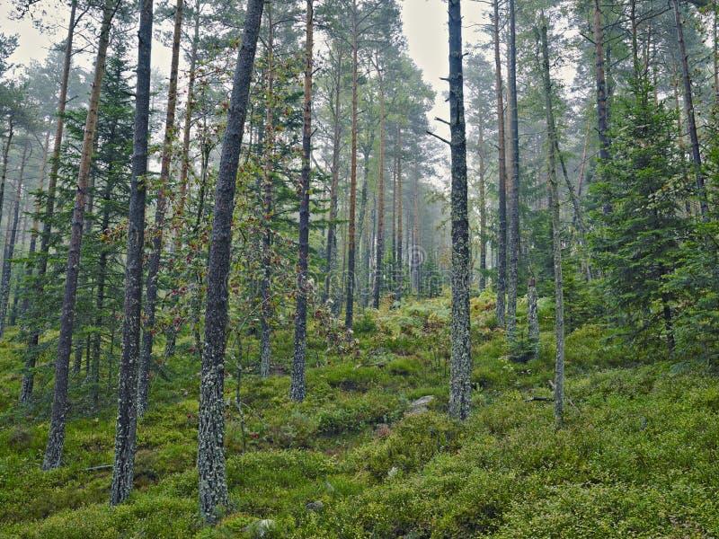 Wood höstsikt arkivfoton
